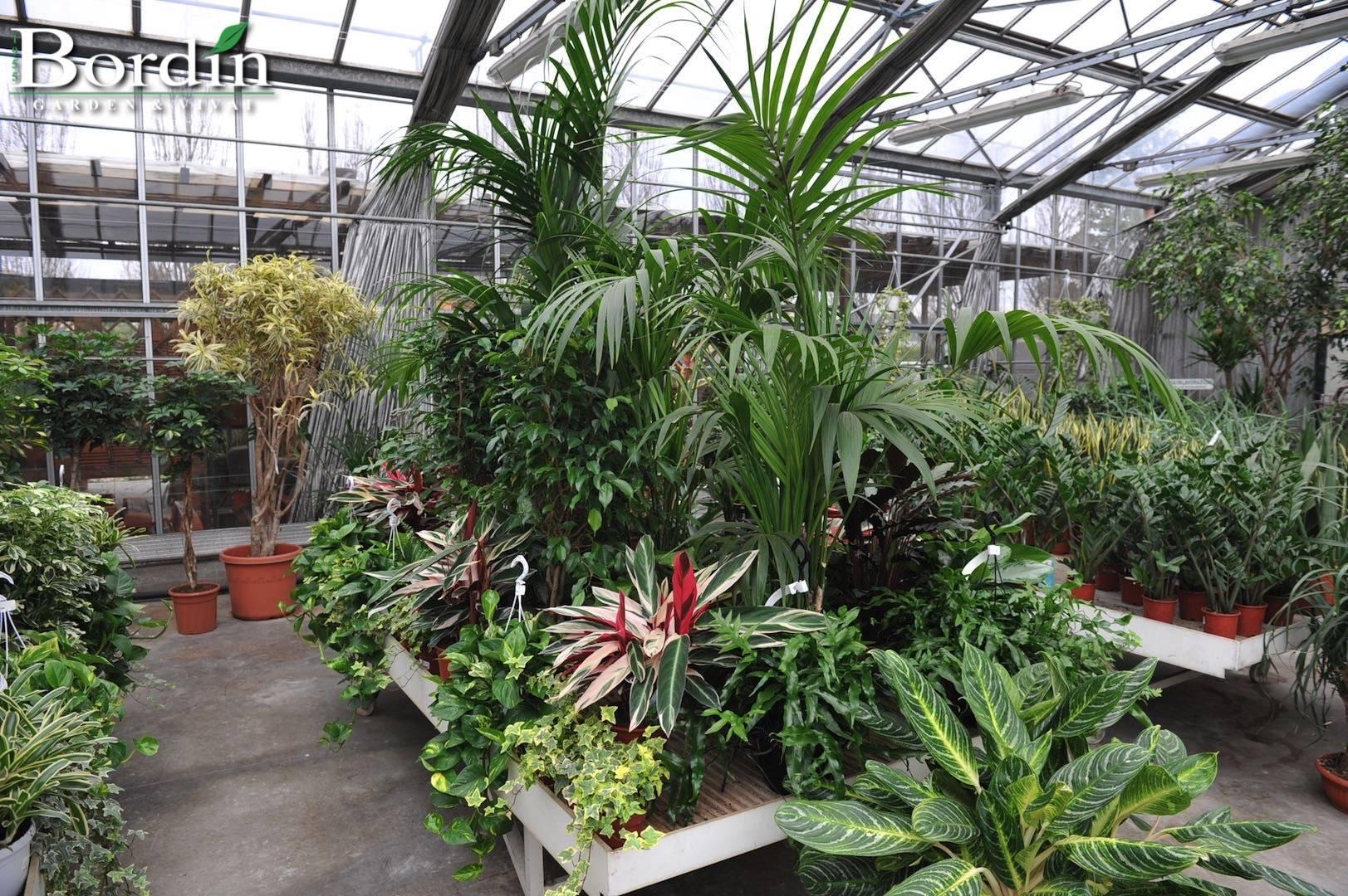 Piante da interno moderne vasi per piante da interno for Piante verdi da interno