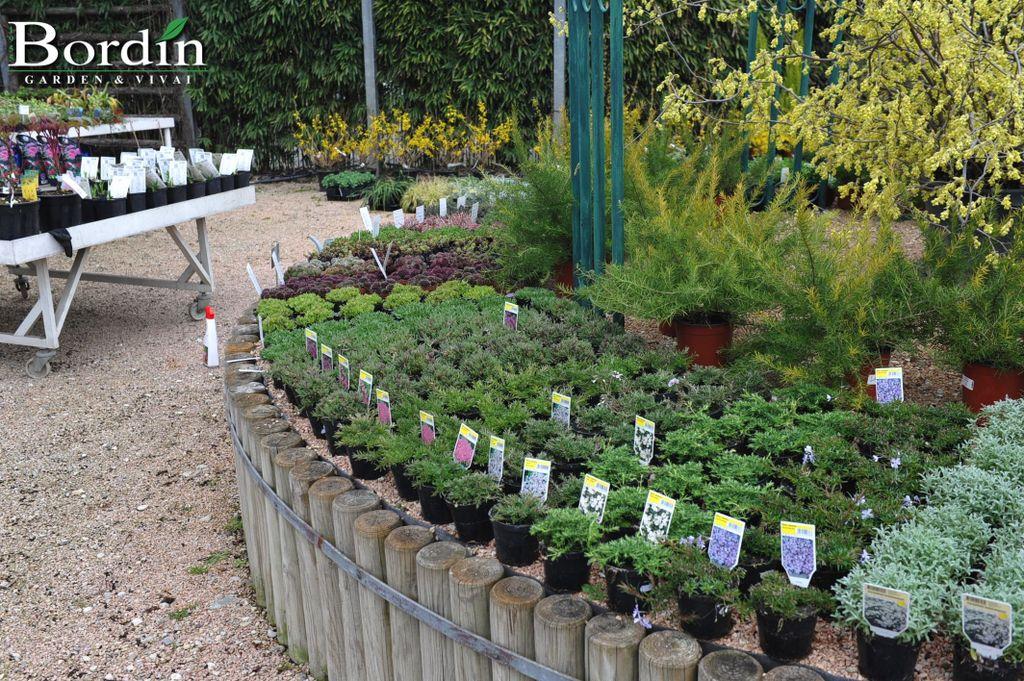 Perenni - BORDIN Garden & Vivai